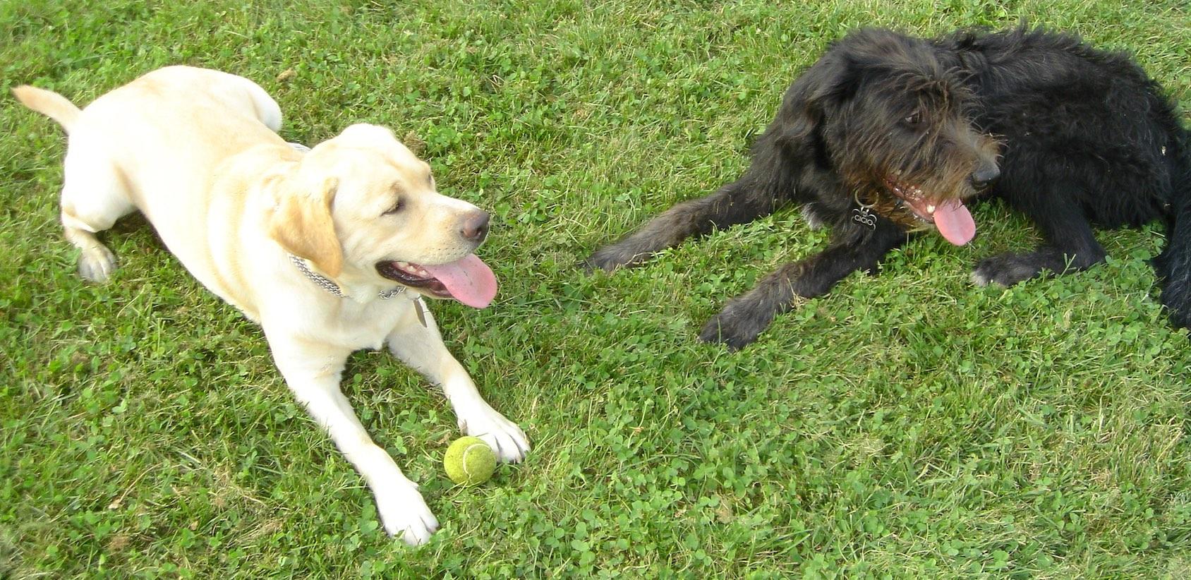 addestramento cani metodo gentile