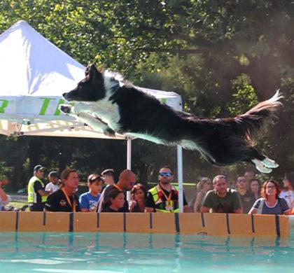 splash dog sics